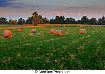 Baled straw on meadow covered with grass