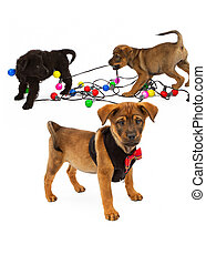 Puppies Playing With Christmas Bulbs