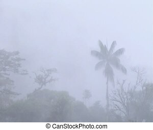 Misty cloudforest - in the Ecuadorian upper Amazon