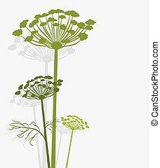 茴香, 黑色半面畫像, 開花
