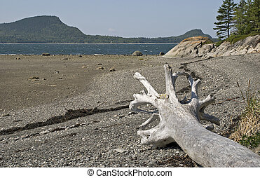 St. Lawrence River shore with dead tree at Le Bic National...