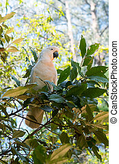 Portrait of white cockatoo sitting on a tree.