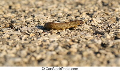 Caterpillar crawling on asphalt surface