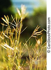 Daisy Against Vivid Green Grass - An Daisy Against Vivid...