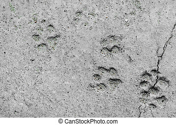 Footprints of animal - An Footprints of a animal on ground