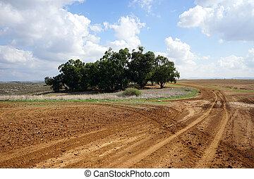 Rural Isrsael - Eucaliptus grove and farmland in rural...