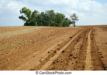 Plowed land - Eucaliptus grove and plowes land in Israel...