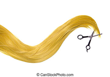 Long golden blonde hair with professional scissors, isolated...