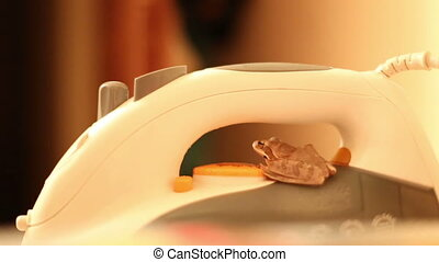 frog sitting on the iron