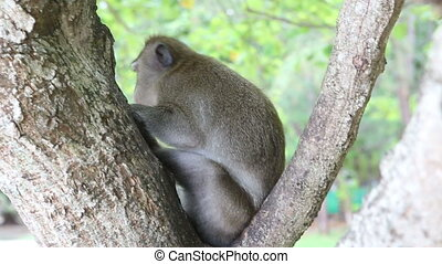monkey sit on tree