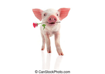 smile pig - smile a pig with a rose flower on a white...