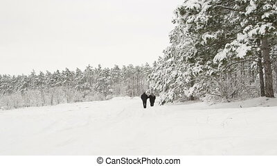 snowy road through a winter forest