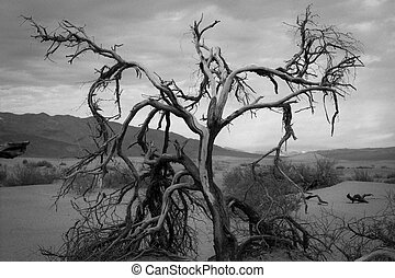 Desert tree in Death Valley