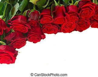 borda, de, fresco, vermelho, vermelho, jardim, rosas,