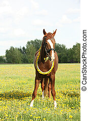 Beautiful chestnut horse at the field with flowers -...