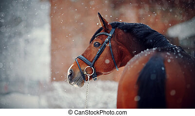Sports horse in the winter.