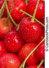 Red Cherries with Water Drops Close-Up - A close-up of ripe...