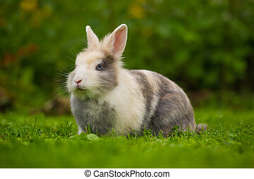 Cute Fluffy Rabbit on Green Grass - A cute fluffy gray and...