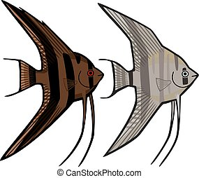 """Chocolate"" and ""Ghost"" Angelfish - vector illustration two..."