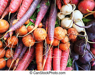Colorful root vegetables Carrots, beetroots, turnips Autumn...