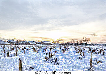 Rural village home in winter time next to cornfield
