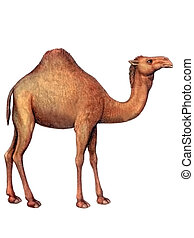 Animal Camel - Colored drawing on the paper animal Camel...
