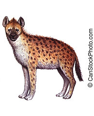 Animal Hyena - Colored drawing on the paper animal Hyena...