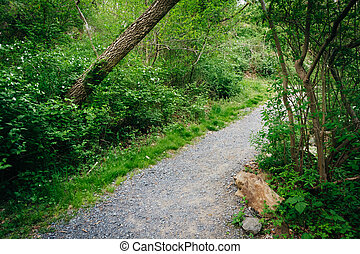 Trail through the forest at Wildwood Park, Harrisburg,...