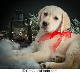 Christmas Puppy - Sweet Lab puppy laying in snow with a...
