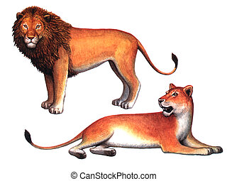 Animals Lion and a Lioness - Colored drawing on the paper...