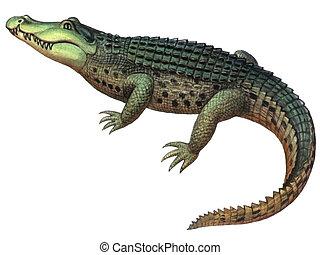 爬行動物, 鱷魚