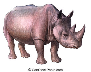 Animal Rhinoceros - Colored drawing on the paper animal...