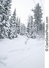 Winter forest - Winter mountain landscape with fir forest...