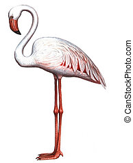 Bird Pink Flamingo - Colored drawing on the paper bird Pink...
