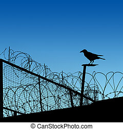 Barbwire - A Barbwire Fence with  Crow