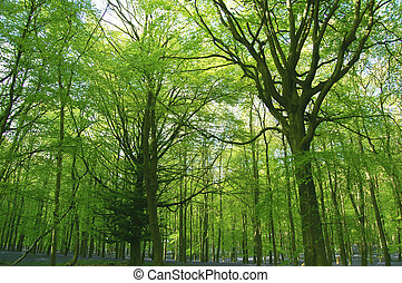 Scenic woodland - Array of forest trees with bluebells on...