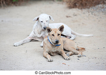 Two Dogs Waiting for food in road side