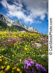 landscape of flower filed on the piedmont of Lovcen mountain...