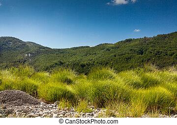 vista, ligado, campo, com, alto, verde, capim, floresta, e,...