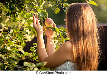 young woman picking apple from tree branch - Portrait of...