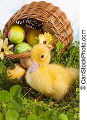 Duckling with easter eggs
