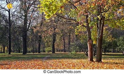 Beautiful park in sunny autumn day