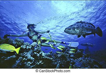 Sucba Diving - Queensland Great Barrier Reef