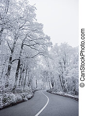 Winter road 2 - Winter road leading into the forest, snowy...