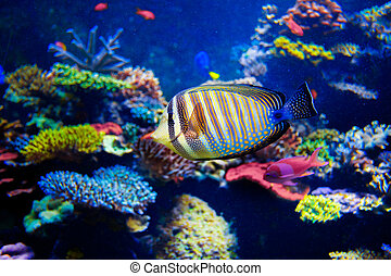 Colorful aquarium, showing different colorful fishes...