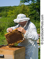 Beekeeper 58 - A beekeeper in veil at apiary among hives...