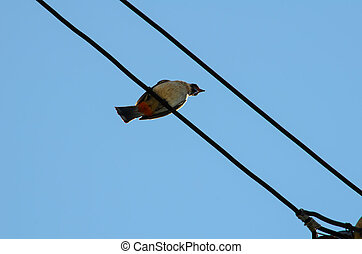 Bird still on electric line against blue sky background