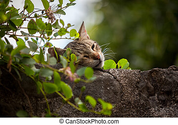 cute cat sleeping on high stone wall overgrown with ivy -...