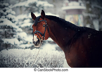 Portrait of a sports horse in the winter - Portrait of a...