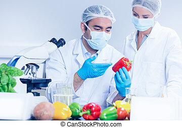 Food scientists looking at a pepper